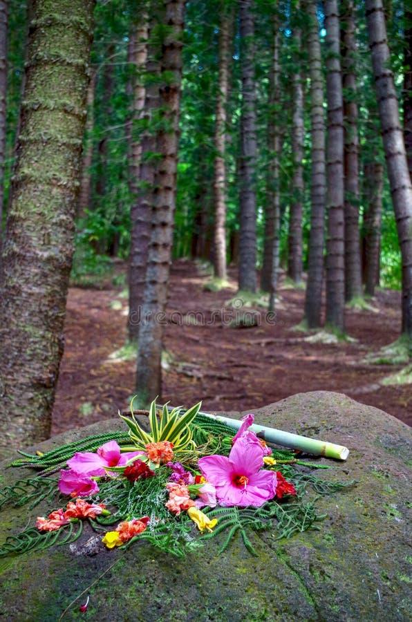 Erbjuda på att sova jätten, Nounou Forest Reserve, Kauai, Hawaii, USA royaltyfri bild