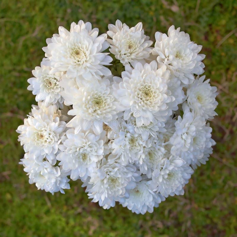 Erblassen Sie weißen Chrysanthemenblumenstrauß auf grünem Hintergrund, Draufsicht lizenzfreies stockbild