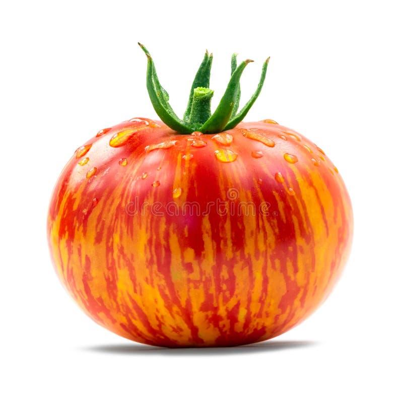 Erbstück-Tomate lizenzfreies stockbild