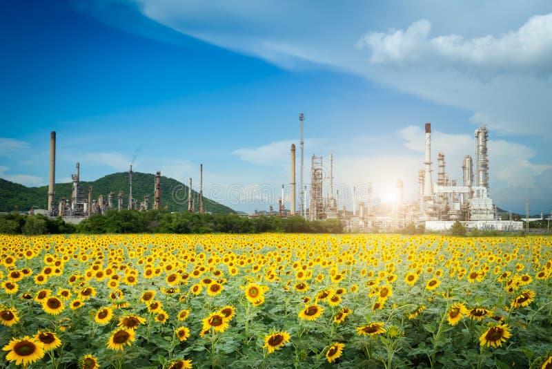 Erdölraffineriefabrik morgens, petrochemisches Werk, Erdöl stockbilder