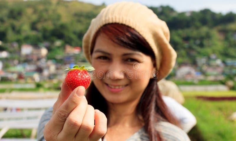 Erdbeerbauernhof in Baguio-Stadt, Philippinen stockbild