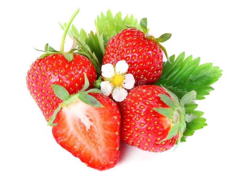 Erdbeerbeere mit grünem Blatt und Blume stockbild