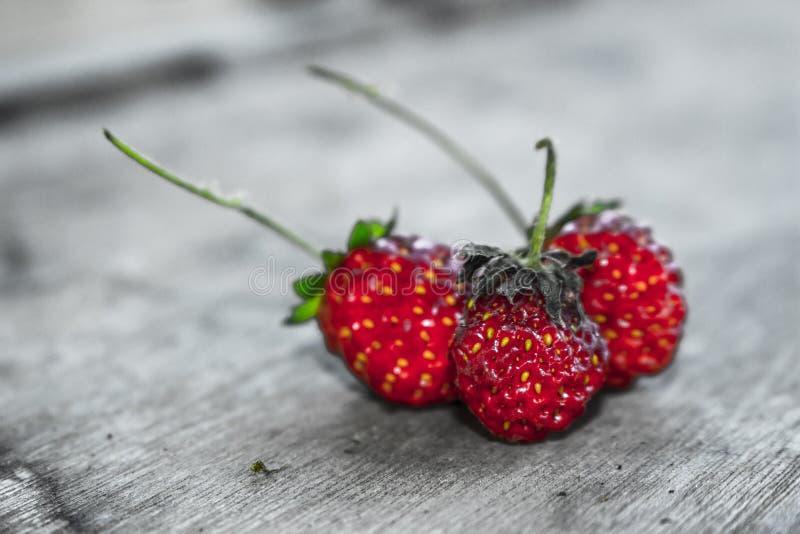 Erdbeere 06 lizenzfreie stockfotos