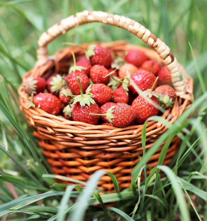 Download Erdbeere stockfoto. Bild von erdbeere, frucht, nahrung - 9099808