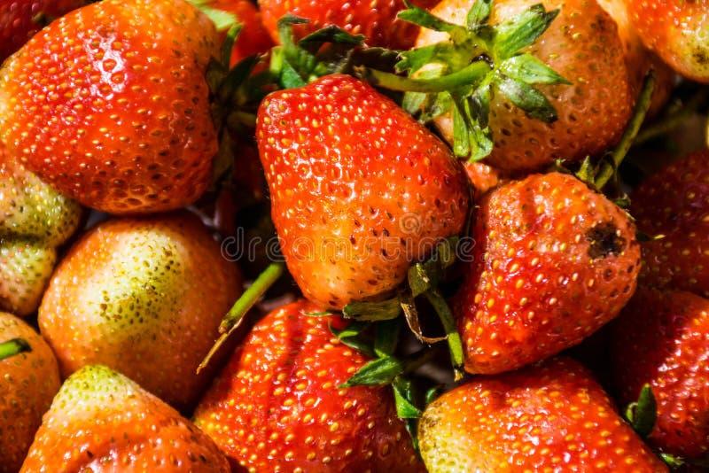 Erdbeere, Blickessen stockfotos