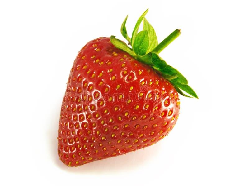 Erdbeere, einzeln. lizenzfreies stockbild