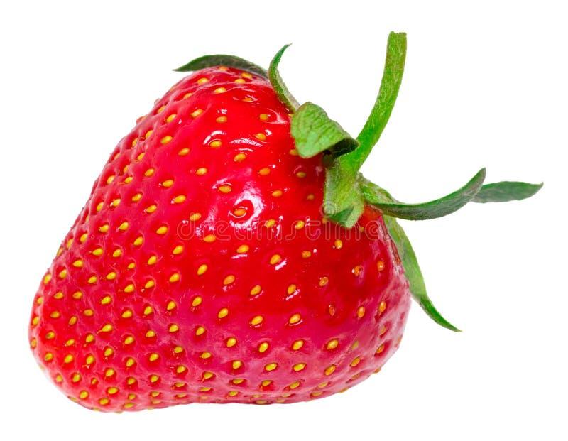 Erdbeere getrennt auf weißem Hintergrund Über Weiß lizenzfreies stockbild