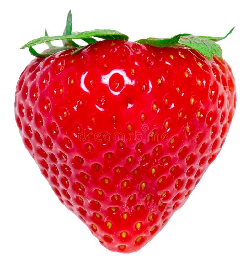 Erdbeere getrennt auf weißem Hintergrund Über Weiß lizenzfreie stockfotos