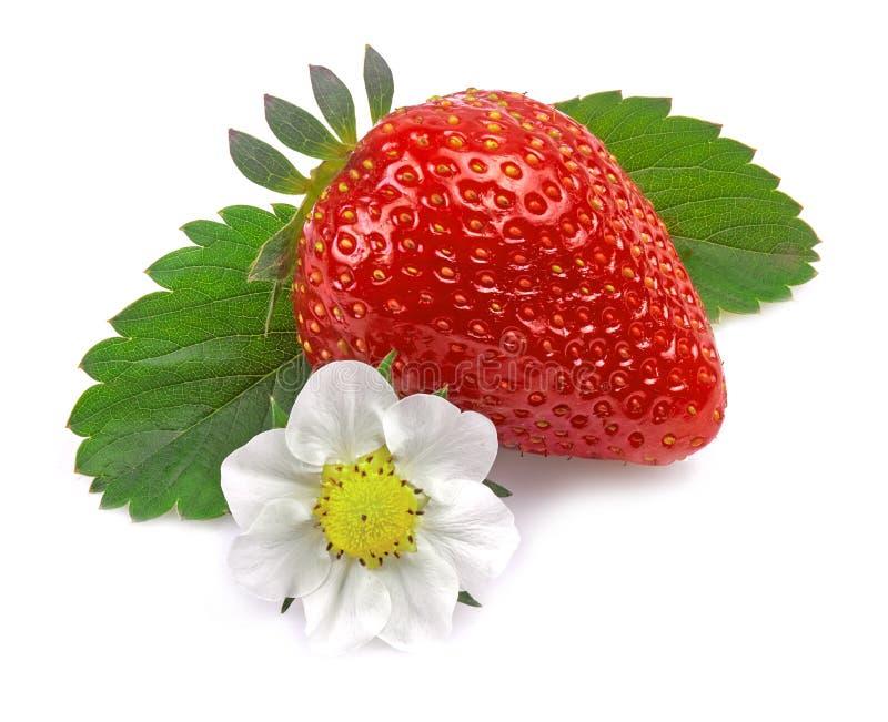 Erdbeere getrennt auf wei?em Hintergrund stockfotos