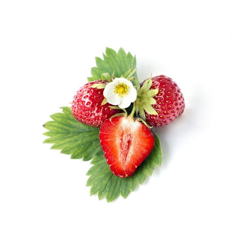 Erdbeere mit Blatt und floyers stockfotos