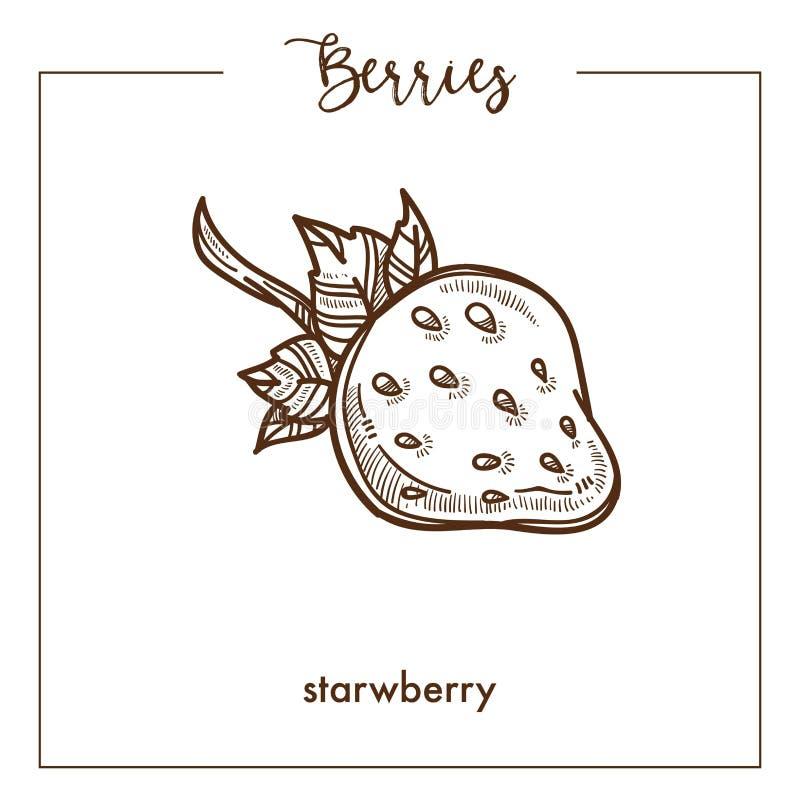Erdbeere mit Sepiaskizze Beere des kleinen Stammes einfarbiger lizenzfreie abbildung