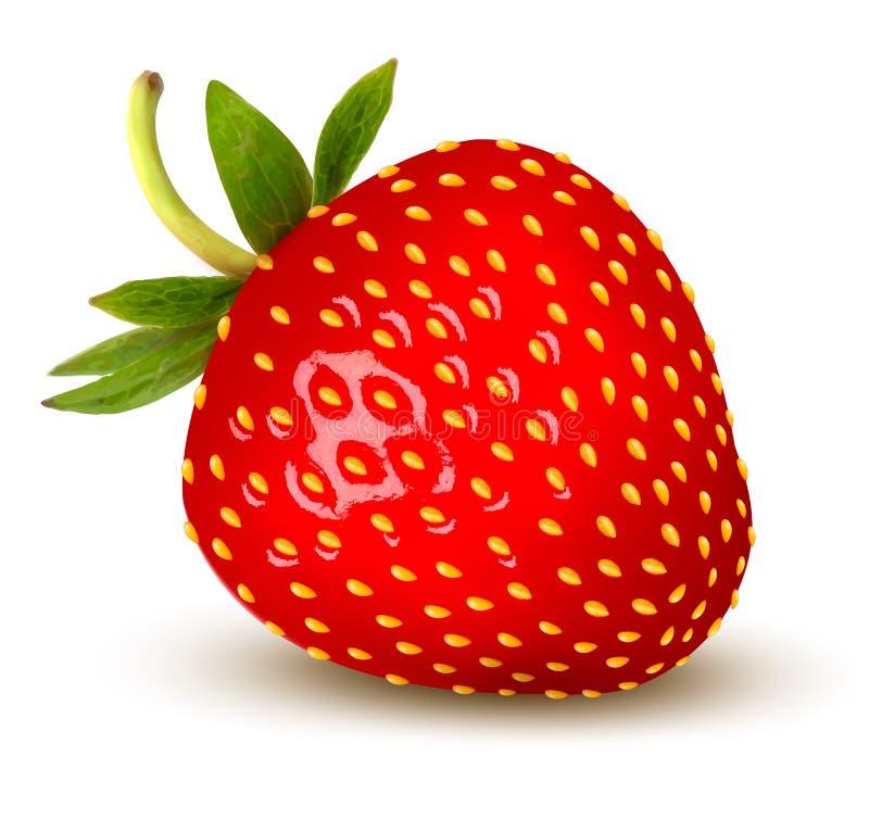 Erdbeere. Vektor. lizenzfreie abbildung