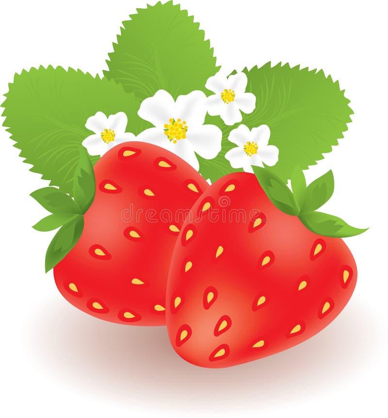 Erdbeeren vektor abbildung