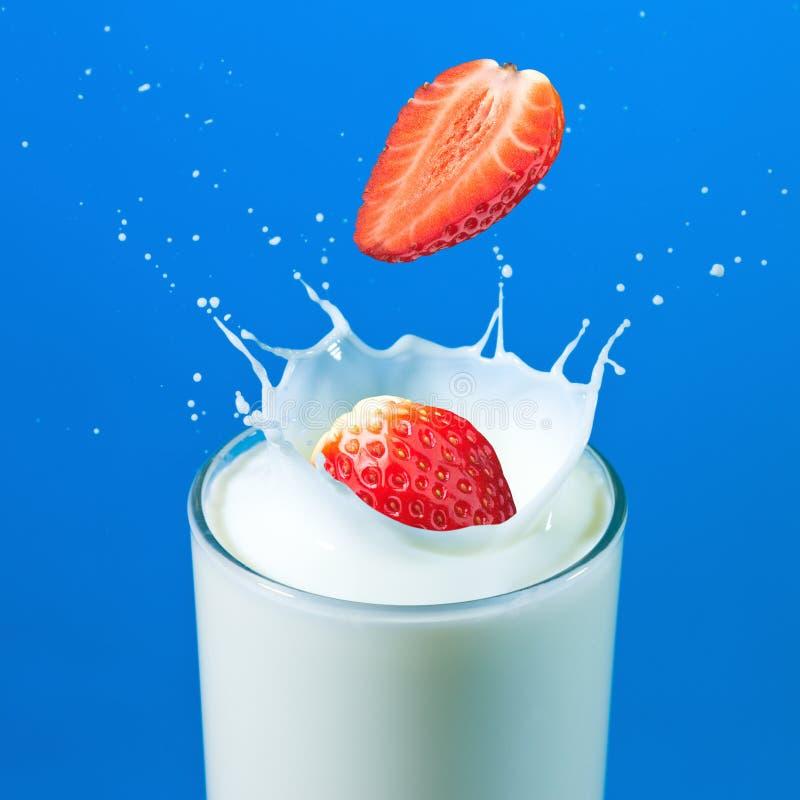 Erdbeeren, die in der Milch spritzen lizenzfreies stockfoto