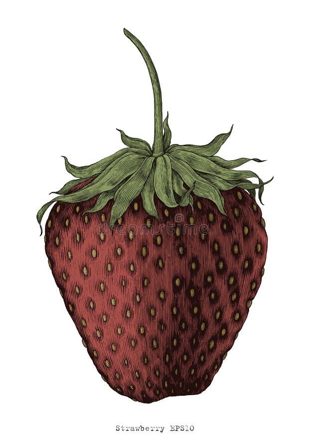 Erdbeerhandzeichnungsweinlesestich-Illustrationsart vektor abbildung