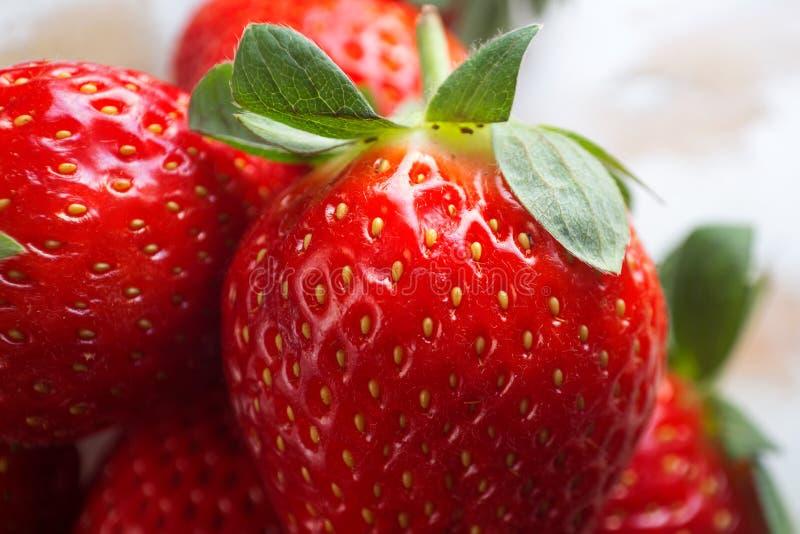 Erdbeermakrorot stockbilder