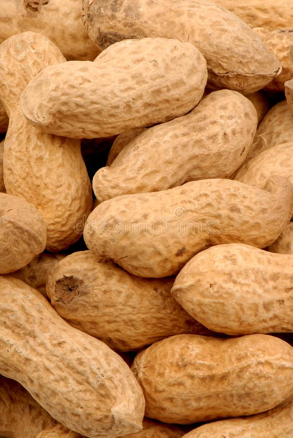 Erdnüsse 3 stockfoto