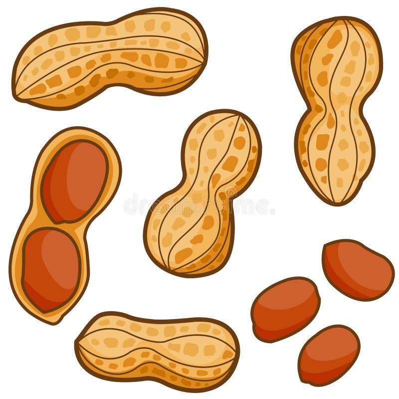 Erdnüsse stock abbildung