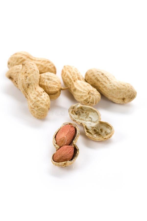 Erdnüsse stockbild