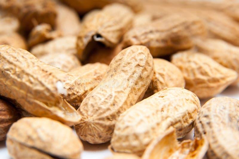 Erdnüsse in den Shells stockfoto