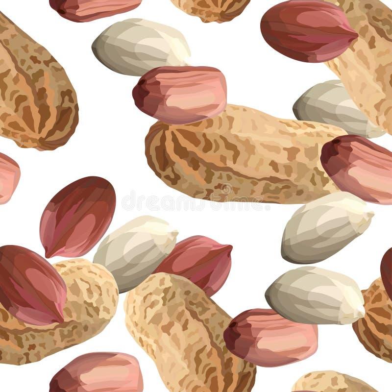 Erdnüsse in der realistischen Art, organischer Imbissabschluß herauf Vektorillustration lizenzfreie abbildung