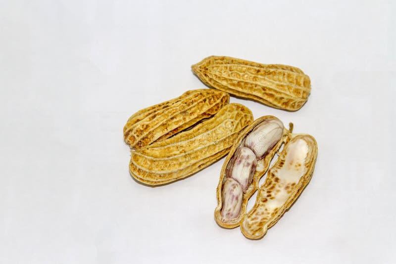 Erdnüsse gekocht und abgezogen lizenzfreies stockfoto