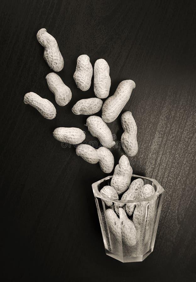 Erdnüsse in ihren Nussschalen stockfotos