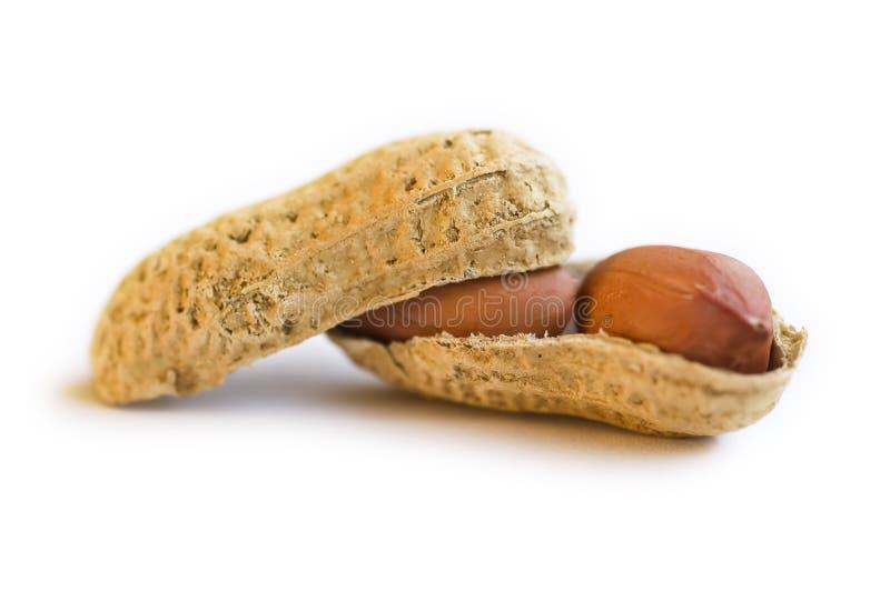 Erdnuss stockfoto