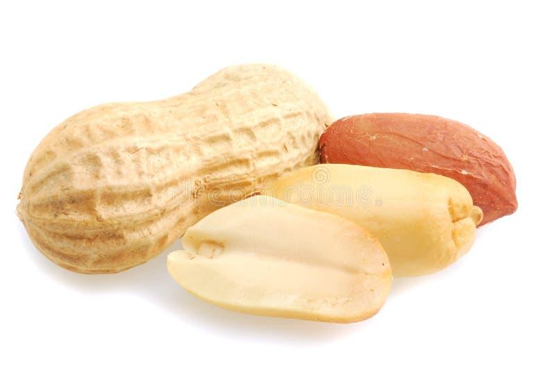 Erdnuss lizenzfreies stockfoto
