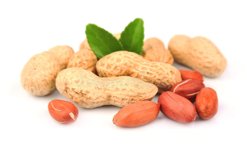 Erdnuss getrennt lizenzfreies stockfoto