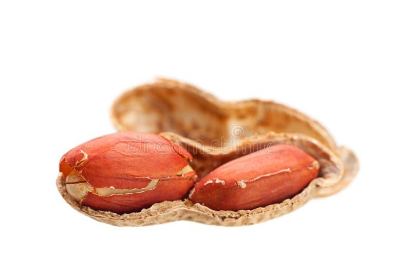 Erdnuss getrennt stockfotos