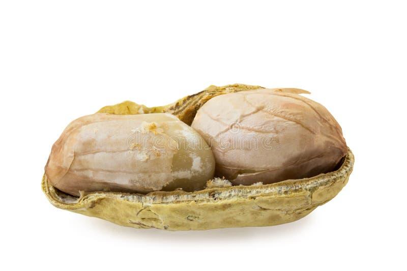 Erdnuss sät ` nach innen stockfoto