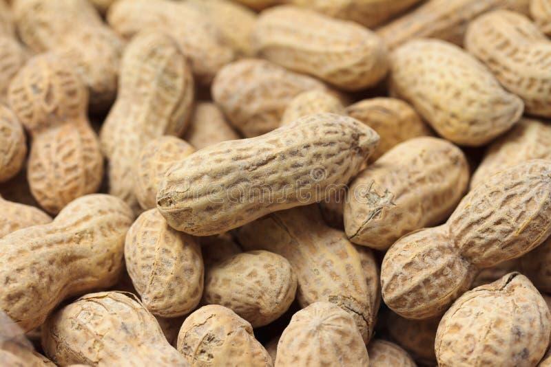 Erdnusshintergrund lizenzfreies stockfoto