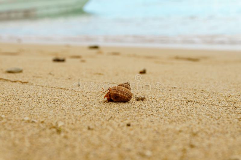 Eremita krab na piaskowatej plaży zdjęcia royalty free