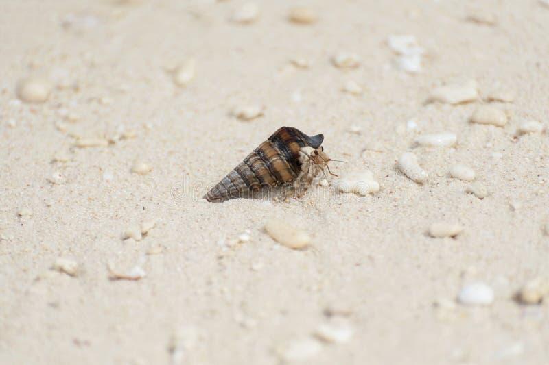 Eremita krab w Shell na Indonezyjskiej wyspy plaży zdjęcia royalty free