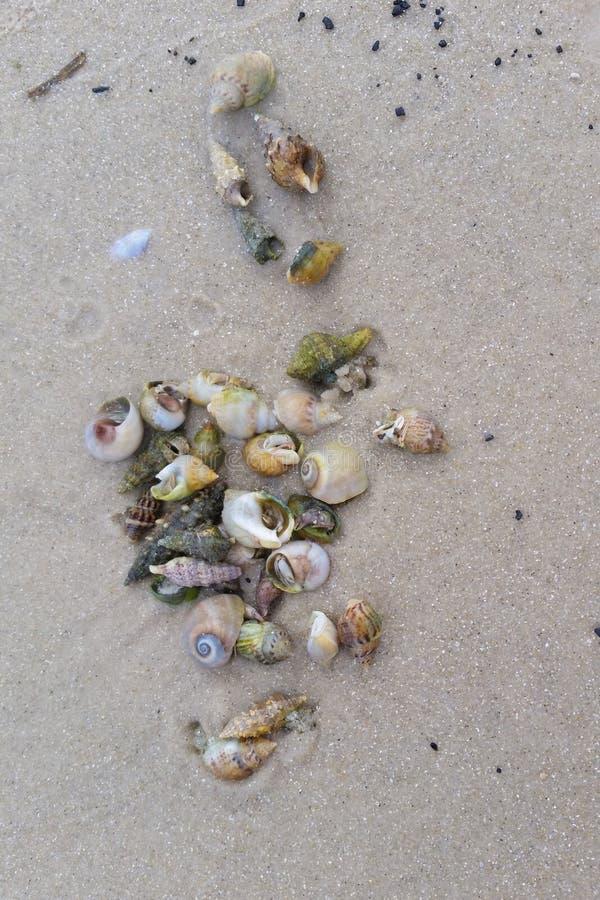 Eremitkrabba på den sandiga stranden arkivbild