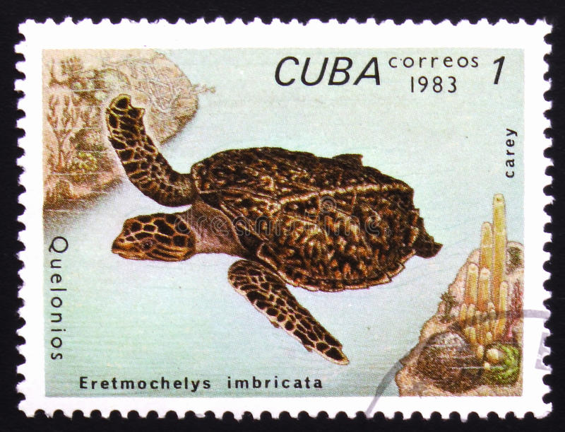 Eretmochelys Imbricata, series devoted to turtles, circa 1983. MOSCOW, RUSSIA - FEBRUARY 19, 2017: A stamp printed in Cuba shows Eretmochelys Imbricata, series royalty free stock photography
