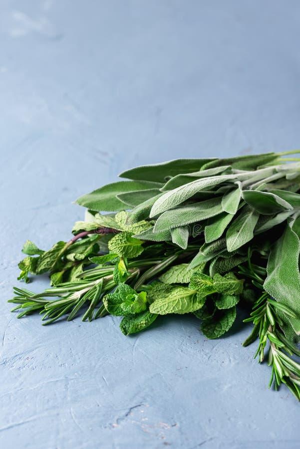erbe aromatiche del mediterraneo:il TIMO