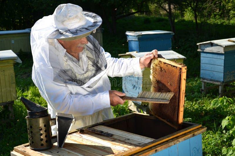 Erfaren hög beekeeper som arbetar i hans bikupa arkivbild