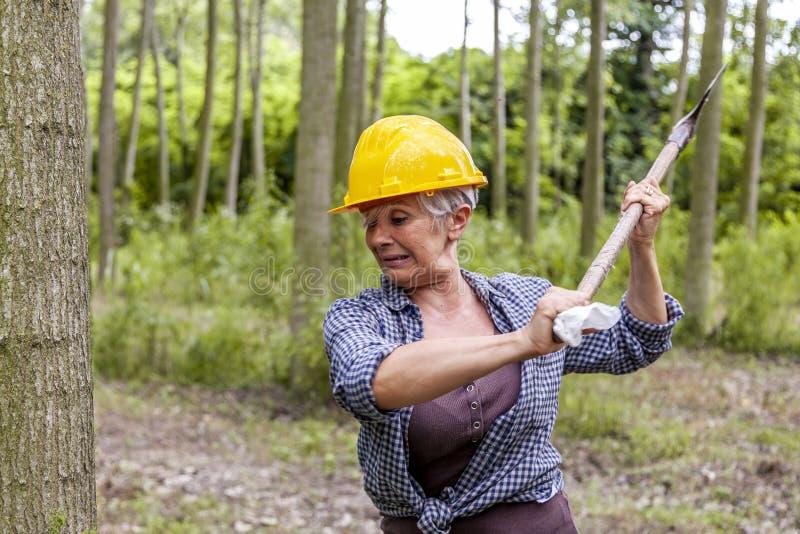 Erfaren kvinnlig skogsarbetare i handling fotografering för bildbyråer