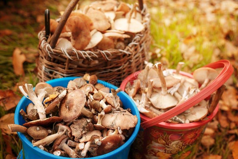 Erfolgreiche Pilzjagd im Herbstwald stockbilder