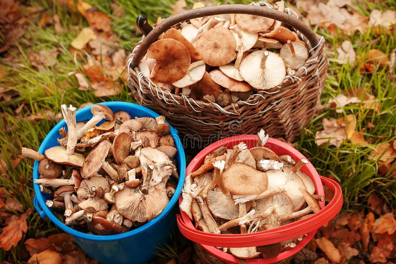 Erfolgreiche Pilzjagd im Herbstwald stockbild