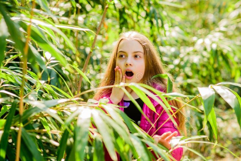 Erforschen Sie Garten Exkursion zum botanischen Garten Anlagen gewachsen f?r Anzeige auf ?ffentlichkeit M?dchenweg im botanischen stockbild