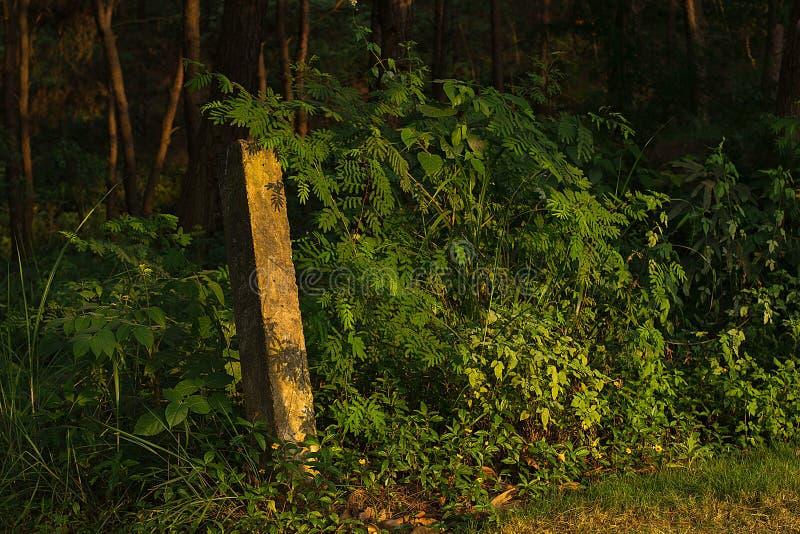 Ergens in Shi-mensen bospark stock foto's