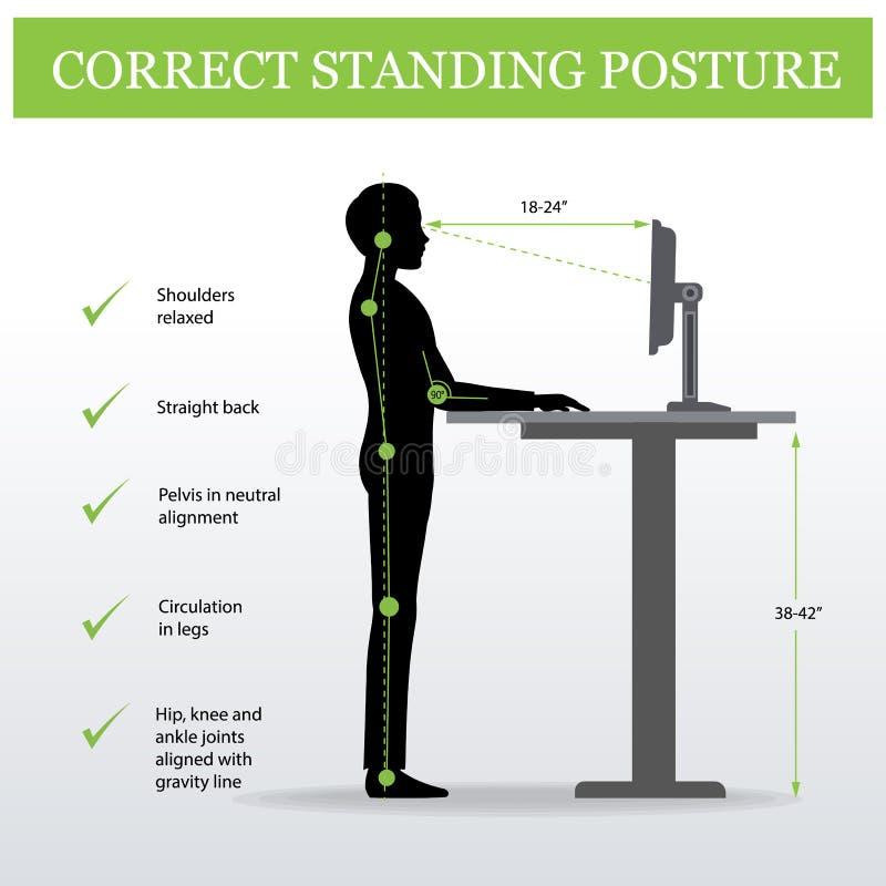 ergonomisch Korrekte stehende Lage und justierbare Tabelle der Höhe vektor abbildung