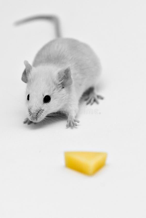 Erhalten Sie Diesen Käse Kostenloses Stockfoto