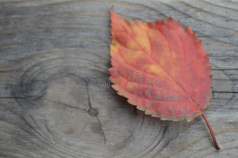 Erhalten von alten Herbstfarben lizenzfreies stockbild