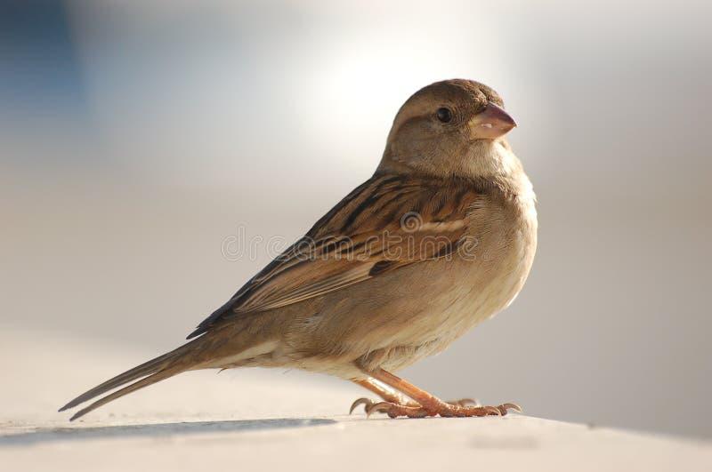 eric sparrow fotografering för bildbyråer