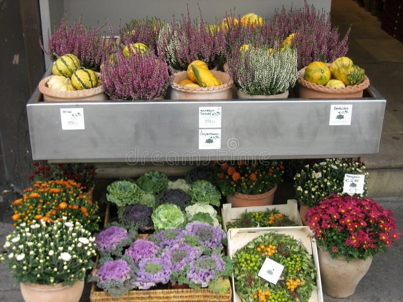 Erica dei fiori delle zucche fotografie stock