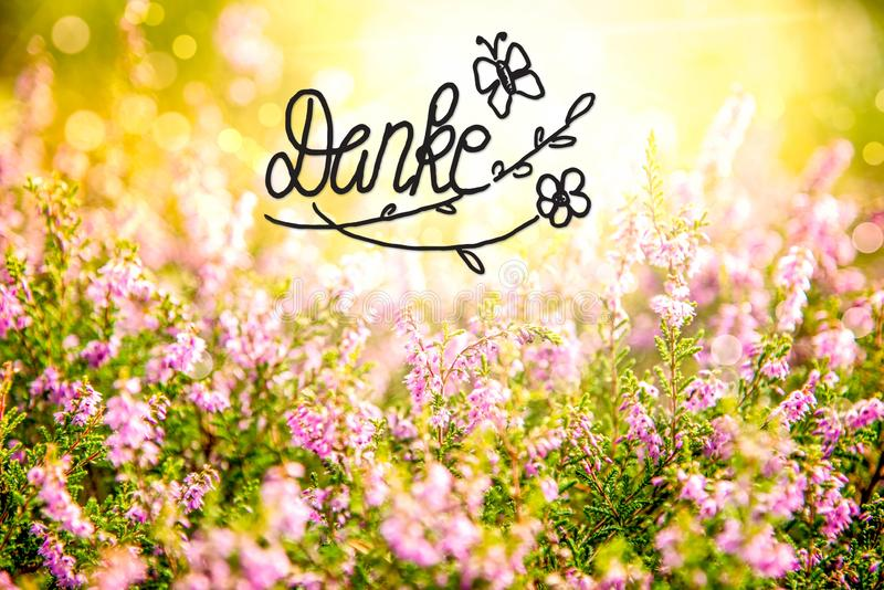 Erica Flower Field, moyens de Danke de calligraphie vous remercient photos stock